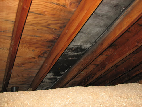 Attic mold from bath recessed light